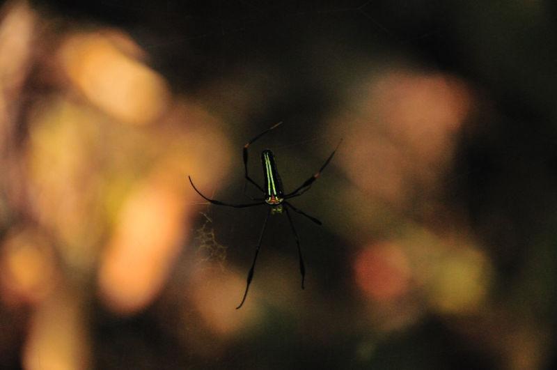 Spider Animal