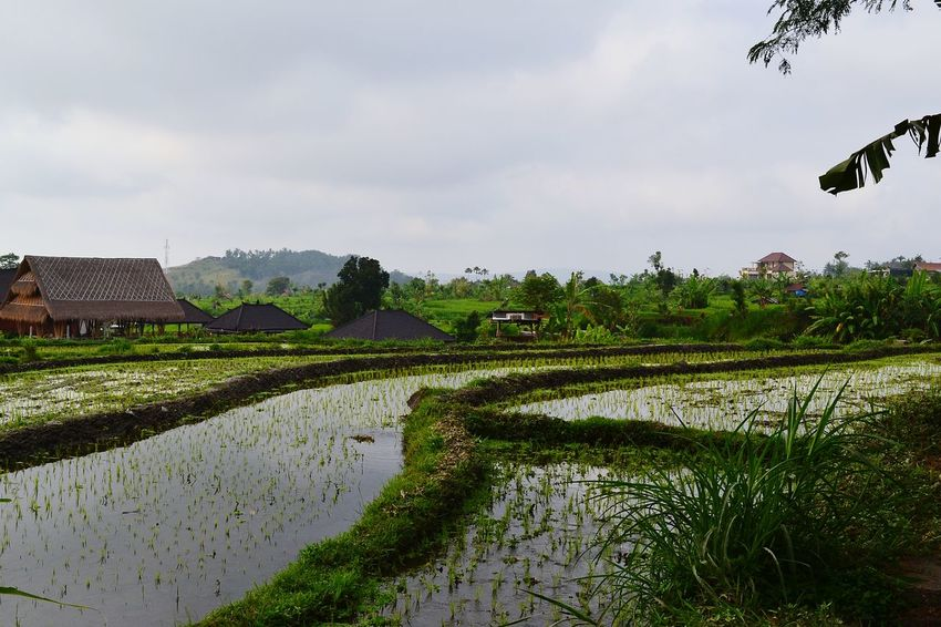 Beautiful Nature Bali, Indonesia Tirtagangga Temple Amlapura EyeEm Indonesia Wonderful View The Week Of Eyeem Ricefields EyeEm Best Shots