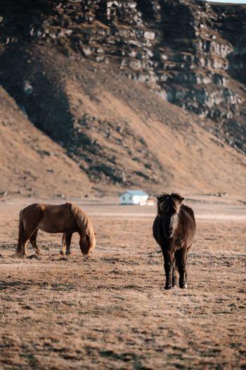 Horses grazing 0n field