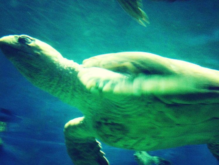 Ocean Turtle Keep It Blurry