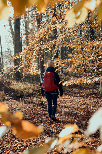 Woman with backpack wandering in a forest on autumn sunny day