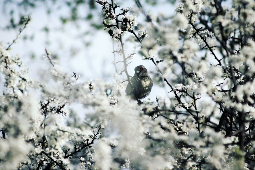 Little bird Animals In The Wild Bird Nature Tree Animal Wildlife Outdoors Beauty In Nature Poland Animal Themes Life Artistic Conon Wildlife Spring Throwback Look Looking At Camera Little The Week On EyeEm