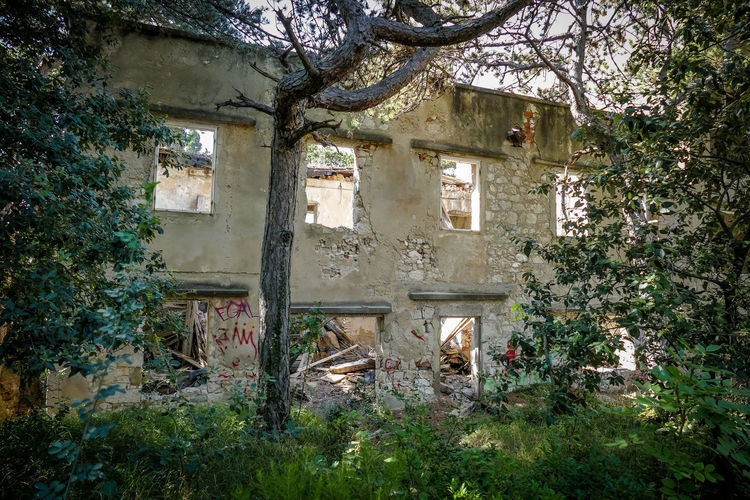 Tree Plant Architecture Building Built Structure Abandoned No People Damaged Day Building Exterior Nature House Growth Window Outdoors Old Destruction Absence Run-down Obsolete Ruined Collapsing
