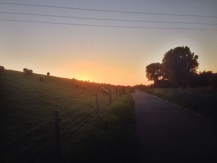 Ostfriesland The Great Outdoors - 2015 EyeEm Awards Landscape EyeEm Best Shots Hello World Nature Wanderlust Traveling Love Beautiful Sunset