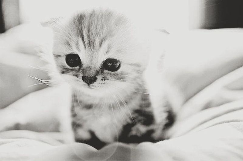 Cat.. Cat Cat♡ Cat Lovers