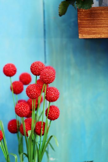 Flower Flowering Plant Freshness Plant Growth Red Nature Day Red Flower Backgrounds Background Decoration Blooming Blossom Close-up Blue Wall Wooden Vintge Copy Space