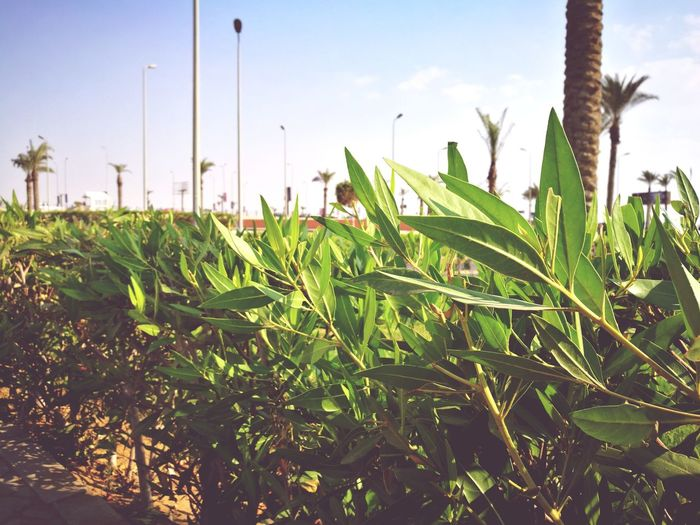 Plant Nature Outdoors No People Green Color Day Landscape Beauty In Nature First Eyeem Photo
