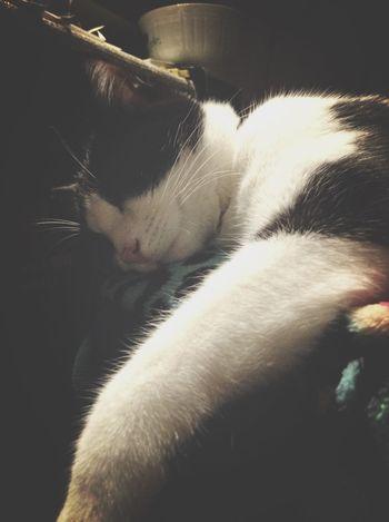 ❤️ Eye4photography  Cats Cat EyeEm Best Shots