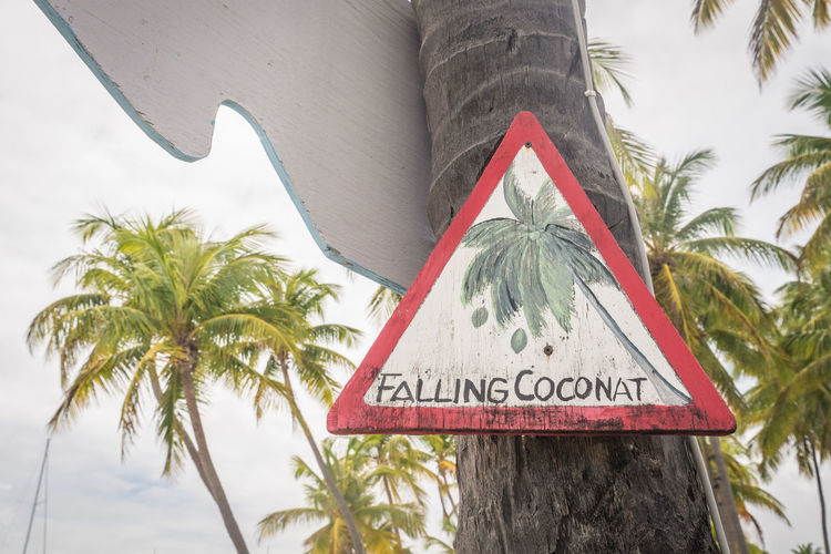 Communication Text Palm Tree Western Script Tree Tropical Climate Plant Sign Information Nature Day No People Tree Trunk Trunk Information Sign Close-up Outdoors Hanging Growth Warning Sign Message Palm Leaf