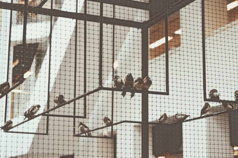 Birds Indoors  Built Structure Architecture Day No People Light Calmness Calm Copenhagen Denmark Copenhagen, Denmark Warm Beige Muted Tones Birds Small Animal Animals Close Closeness The Architect - 2017 EyeEm Awards
