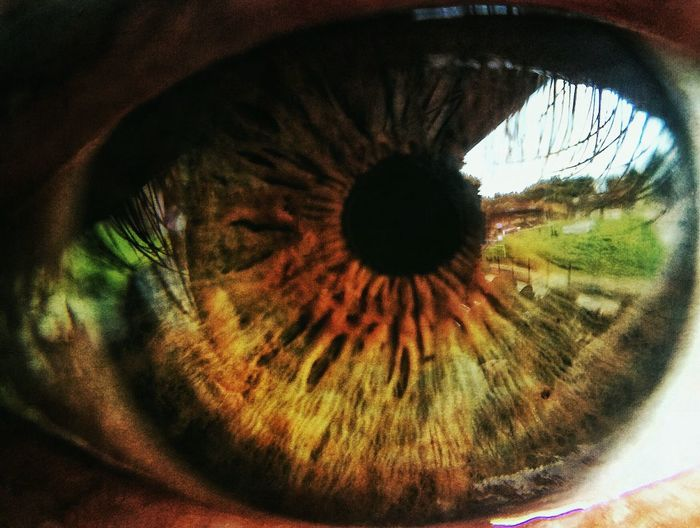 IPhoneography Macro Eye Iris Pupil Reflection