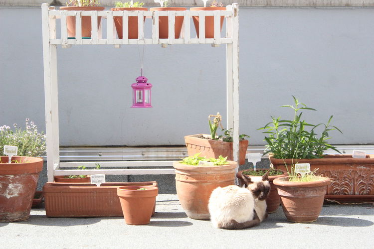 Animal Balkony