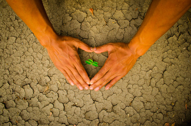 plant glowing on dry sand, Hope concept Drought Desert Hope Plant Adult Arid Climate Close-up Concept Cracked Day Desert Dirt Drought Dry Glowing Hand Heart Heart Shape Human Body Part Human Hand Nature One Person Outdoors People Real People