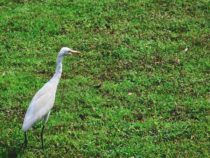 Crane Cranes Cranelife Cranelovers Cranebird Birdwatching Nature Things I Like