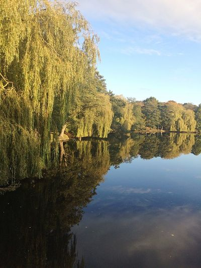Willow Tree Water Reflection Sky Nature Tree Plant Beauty In Nature Lake Day Cloud - Sky #FREIHEITBERLIN