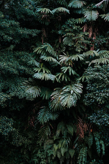 Deep green plants in the jungle. Backgrounds Beauty In Nature Branch Close-up Coniferous Tree Day Fir Tree Forest Full Frame Green Color Growth Land Leaf Nature No People Outdoors Pine Tree Pine Woodland Plant Plant Part Tranquility Tree