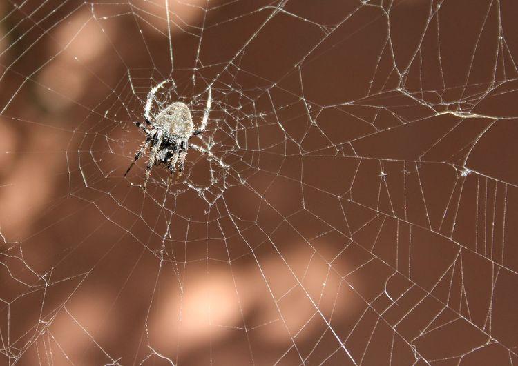 Paciente Web