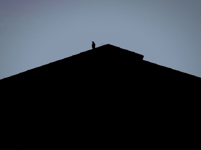 Bird Silhouette Raven - Bird Perching Architecture Outdoors Animal Themes Animals In The Wild Vulture Black Bird On Roof Black Bird Bird Silhouette House Silhouette House Bird On The Rooftop Bird On Rooftop Bird On Roof Black And White With A Splash Of Colour Black And Blue Pitched Roof Peak Triangle Pigeon Roof The Architect - 2017 EyeEm Awards