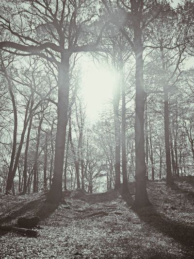 Extreme luminosity for this black and white transformed edited vertical forest photography against little hill of 2018 Forest Way Trees Forest And Luminosity Forest Magic Full Luminosity Luminosity Intense Luminosity Soft1 Forest Photography