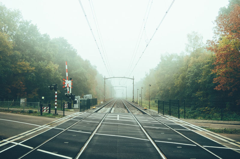 Railroad Tracks Amidst Trees During Foggy Weather
