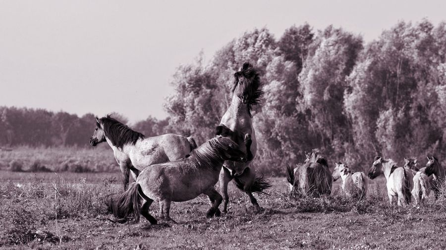 Horses Monochrome PNW Animal Themes Horse Outdoors Landscape No People Nature Beauty In Nature Animal Wildlife Animals In The Wild Blackandwhite