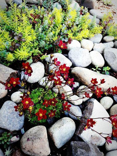 Pebble Stone -