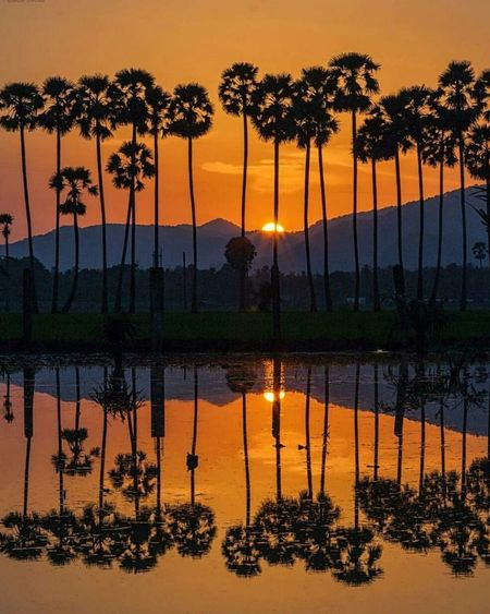 Sunset _Nature Feels
