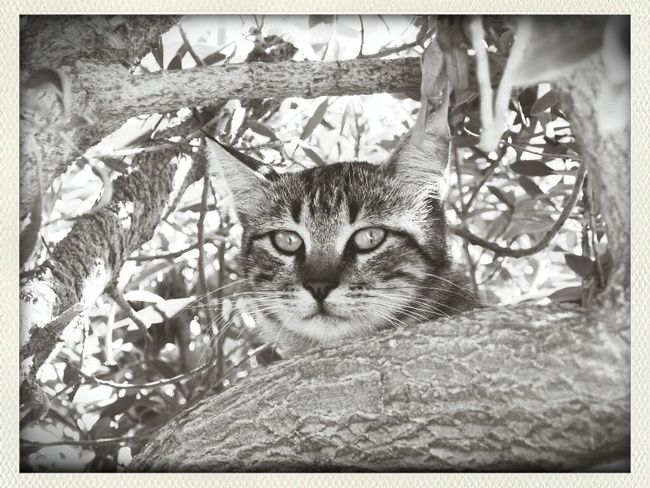 B&w Cats
