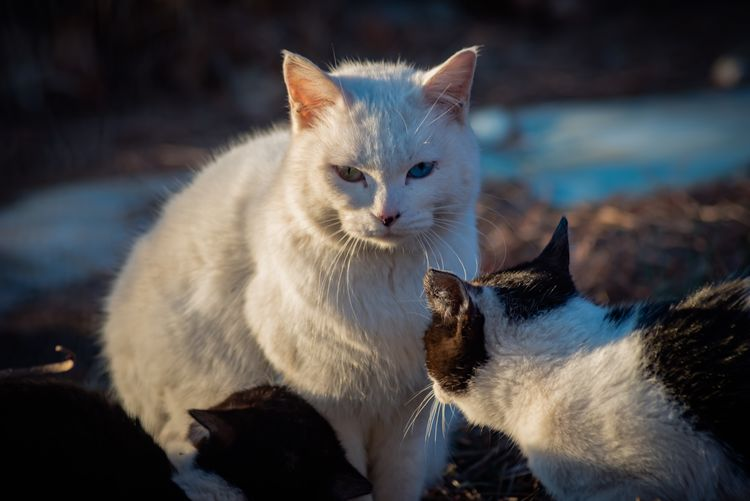 EyeEm Selects Domestic Cat Pets Domestic Animals Feline Animal Themes Cat No People Nature Close-up
