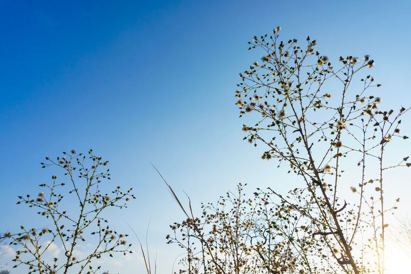 GAss Glass Sky Low Angle View Large Group Of Animals Nature Clear Sky Plant Blue Day Tree