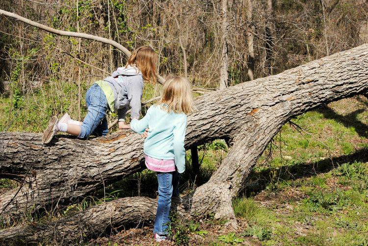 Two girls climbing fallen tree in woods