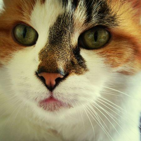 Sweet cat ♥