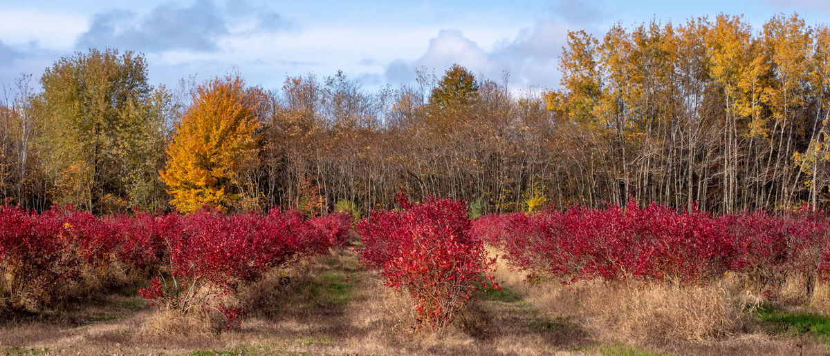 Red flowering plants on land against sky during autumn
