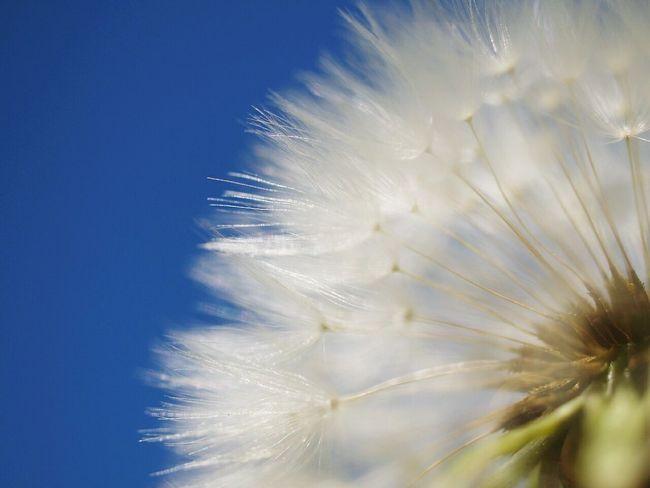 ふわふわ… Japan Spring Macro Photography Macrophotography EyeEm Nature Lover Macro_collection Macrolove Cute Boke Natural Photo Morning Macro