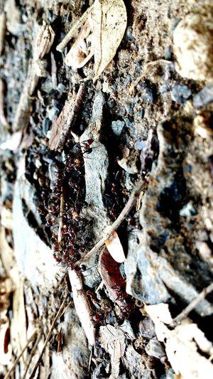 Ants Buliding House