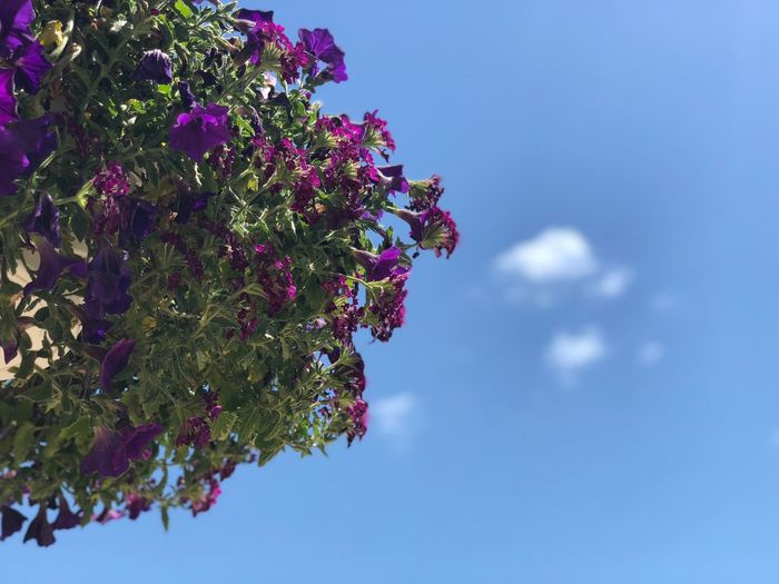 The Week on EyeEm Hanging Plants Potted Plant Plant Growth Sky Tree Nature Beauty In Nature Low Angle View Flower No People Day Flowering Plant Freshness Cloud - Sky Plant Part Vulnerability  Decoration Outdoors