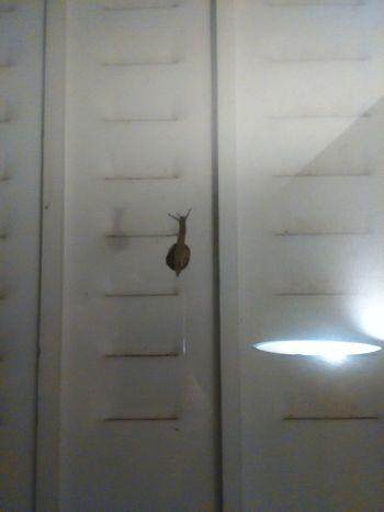Objet Glissant Non Identifié, or the Unknown Sliding Object Snail Escargot UFO? Ovni ? 😏