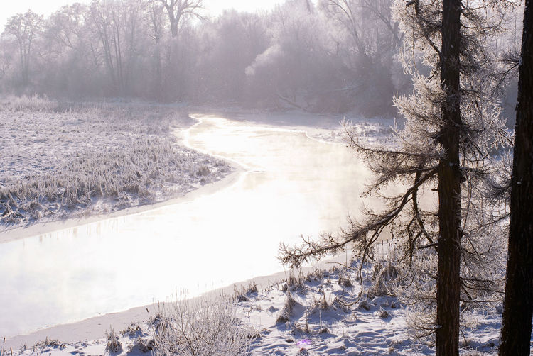 Minsk, Loshica Park Frozen Snow ❄ Winter Beauty In Nature Cold Temperature Nature Water