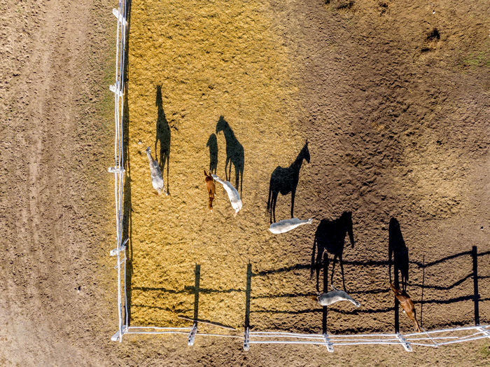 Aerial view of horses at ranch