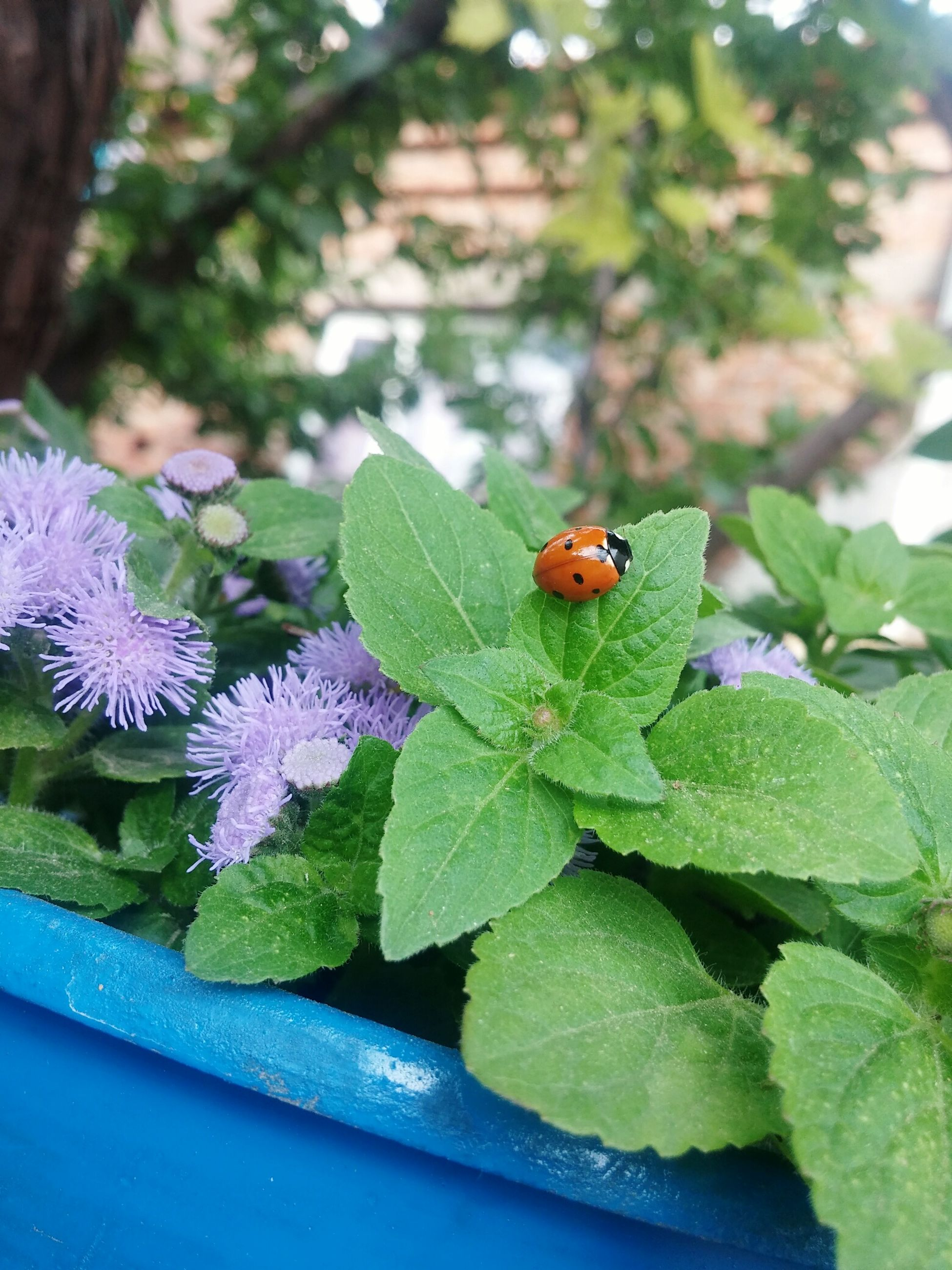 leaf, plant, growth, insect, one animal, green color, nature, animal themes, animals in the wild, no people, day, flower, outdoors, fragility, close-up, beauty in nature, freshness, flower head, tiny, ladybug