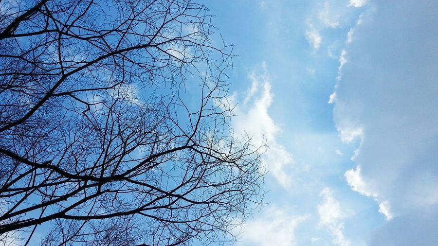Sky Taking Photos Photography Enjoying Life Nature Tree Photo♡ Photoshooting