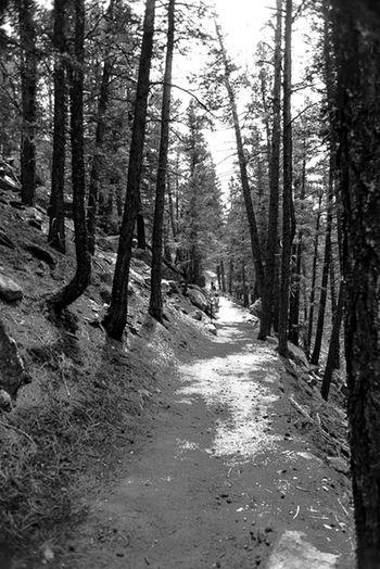 Hiking trail at Boulder, Colorado Enjoying Life Taking Pics Nature