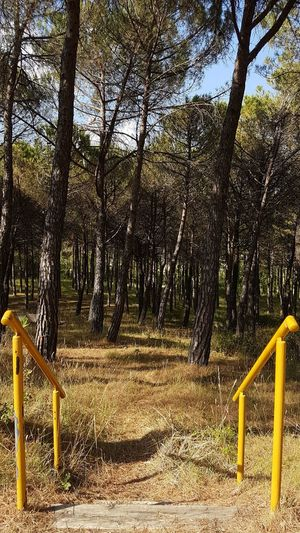 Steps Into The Forest Yellow Handrail Way Into The Forest No People Special Entrance The Way Forward Trees And Dry Grass No Filter, No Edit, Just Photography