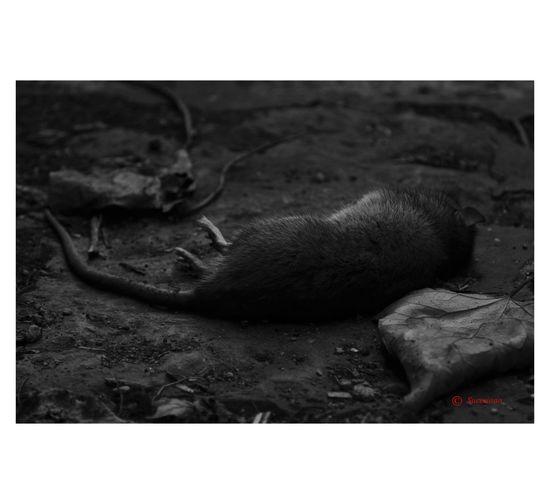 """""""un resquicio de belleza en Scampia"""" Artecontemporaneo Blackandwhite Photography Arte Camorra Napoli Viaje Photooftheday"""