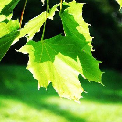 Igme Igers Igaddict Ignation instago instame instalove jj jj_page jj_forum nature nude leaf like follow popular photography