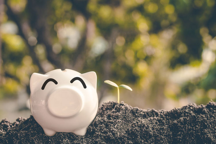 Finance Close-up Piggy Bank Investment Savings Nature Representation Growth Plant Business Currency