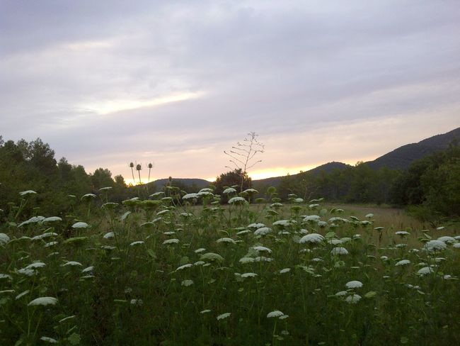 Lined With Gol Mountain Flower Silver Skies Sunrise Sunrise In Perinees White And Green