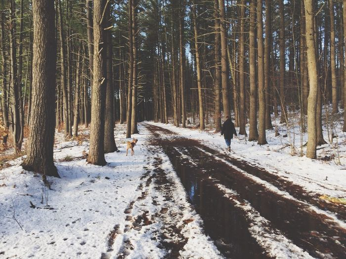 Road Nature Walking Hiking Dog Dogs Walking Dog People In Nature Dogs In Nature Snow Winter Shootermag Outdoors Forest Forest Path