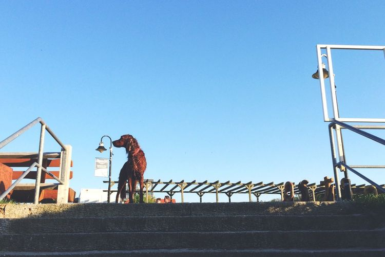 Low angle view of dog by steps against clear sky