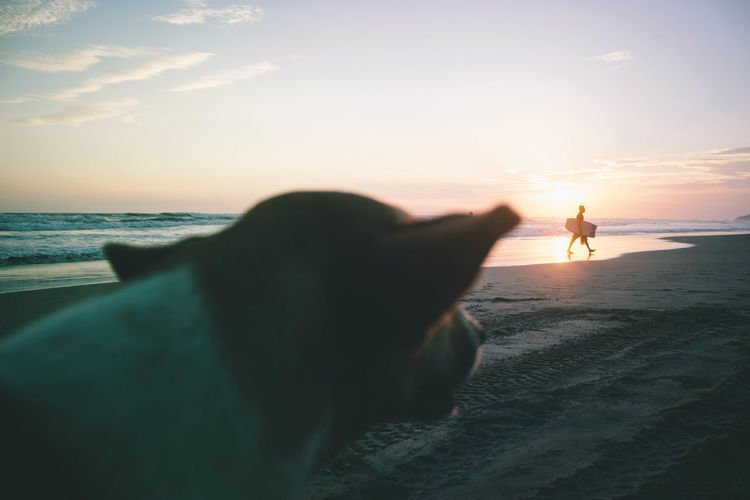 Dog watches the sunset as a man walks in front of it. Adult Animal Animal Themes Beach Beauty In Nature Day Dog Domestic Animals Horizon Over Water Leisure Activity Loyalty Mammal Nature One Animal One Man Only One Person Only Men Outdoors People Pets Sea Silhouette Sky Sunset Water Finding New Frontiers